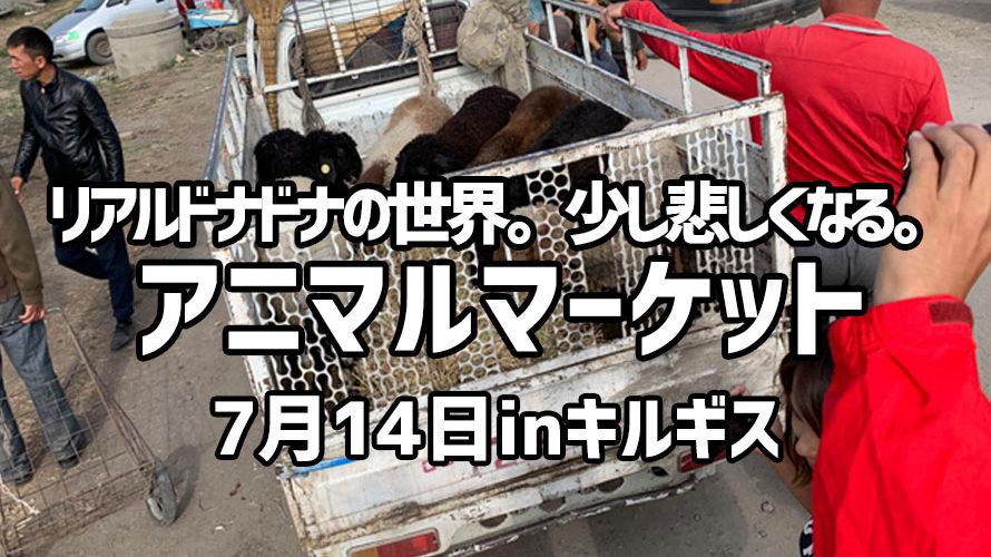 リアルドナドナの世界。少し悲しくなる。 アニマルマーケット 7月14日inキルギス