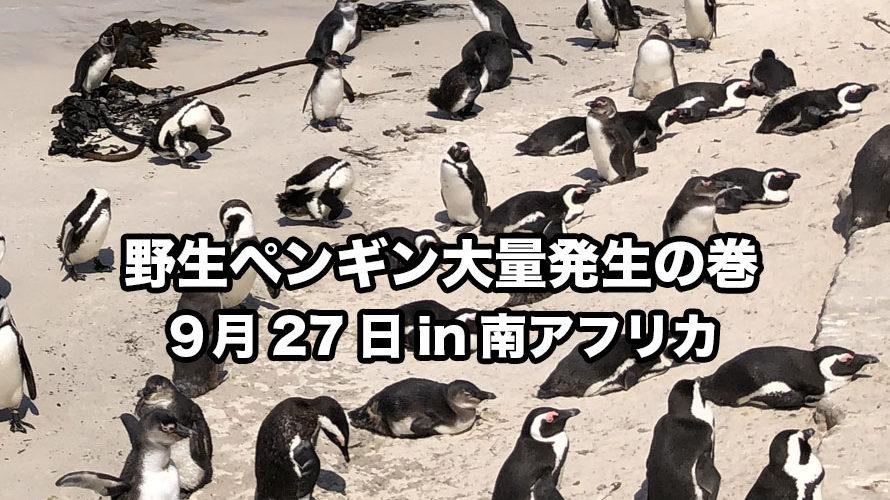 野生ペンギン大量発生の巻 9月27日in南アフリカ